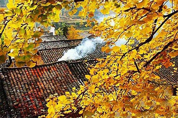 晚秋赏叶 秋天最有人情味的色彩