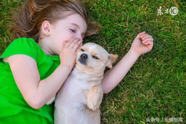 宠物经济产业链:行业爆发式增长,宠物食品和宠物医疗是占比最大的两个子行业 : 经理人分享