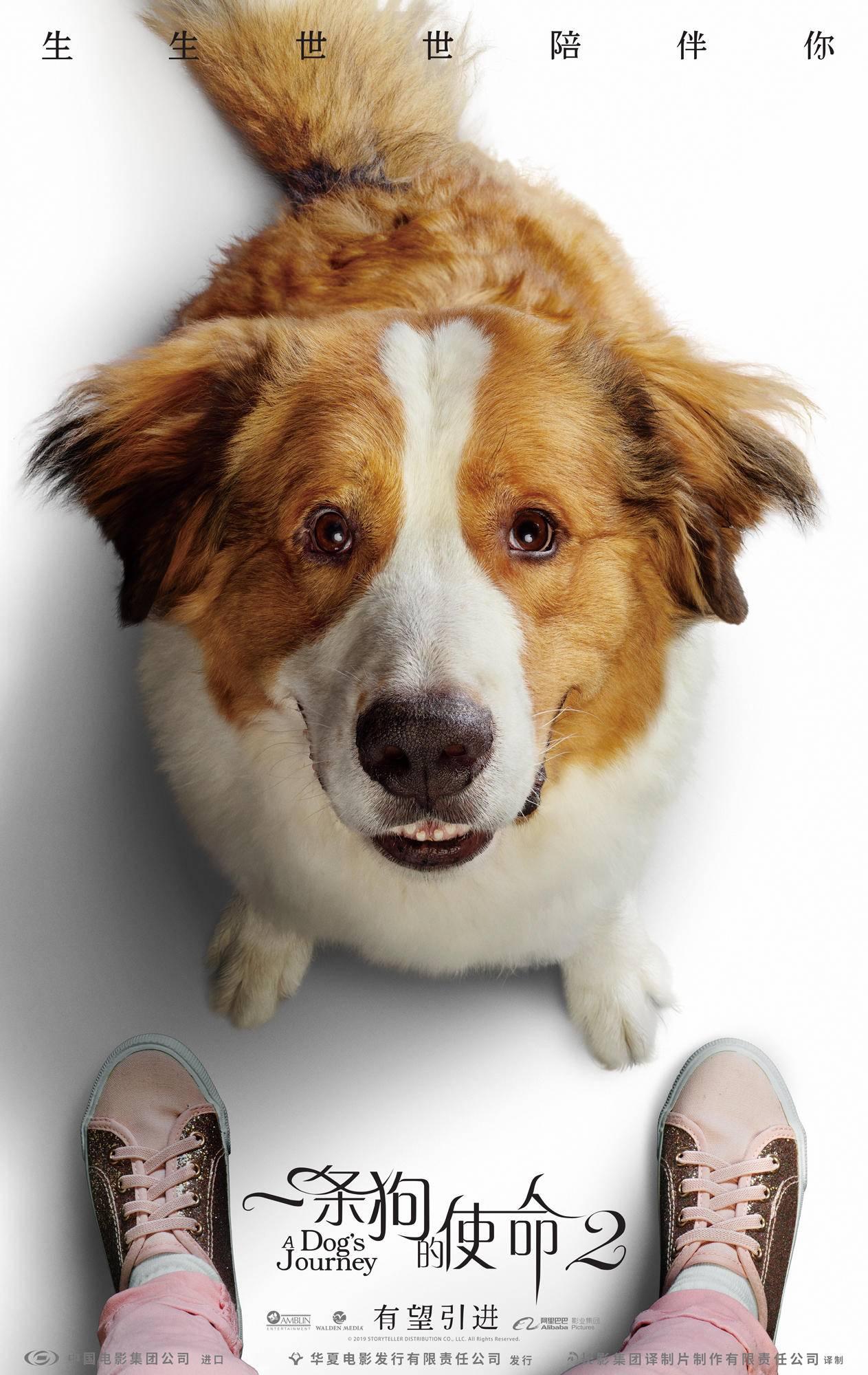 《一条狗的使命2》携原班人马归来,贝利再掀暖心风暴